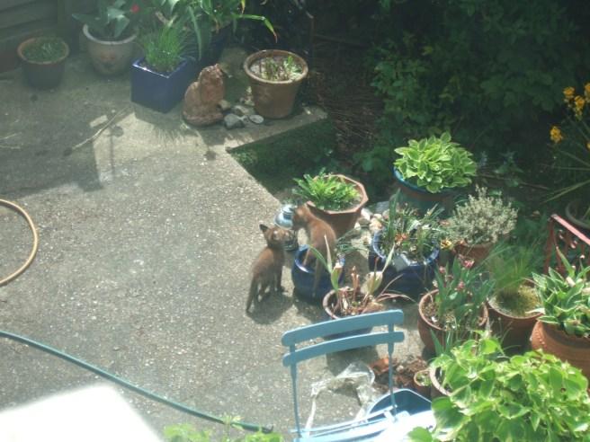 Plant pot fan